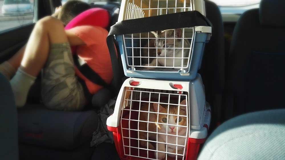Como viajar con tus mascotas y no morir en el intento.