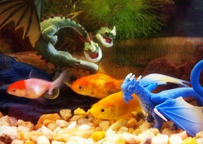 peces3